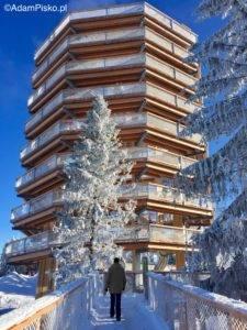 Szlak w koronach drzew - wieża widokowa